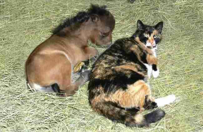 15 απολύτως αληθινά μίνι άλογα που θα σας κλέψουν τη καρδιά!