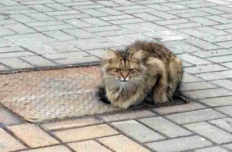 Γάτα - Χάτσικο περιμένει τον ιδιοκτήτη της για πάνω από 1 χρόνο!