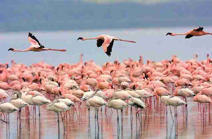 Λήμνος: Βουτιές παρέα με τα ροζ φλαμίνγκο.