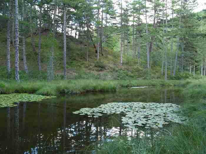 Η λίμνη με τα νούφαρα! Μια παραδεισένια λίμνη στο Ανατολικό Ζαγόρι!
