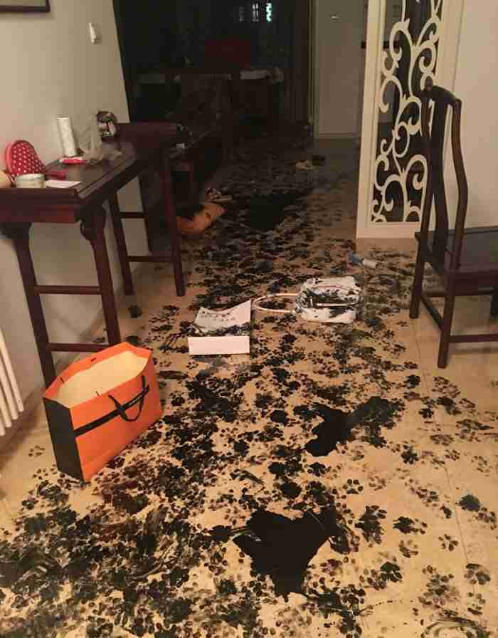 Άφησαν το σκύλο μόνο του στο σπίτι για τρεις ώρες. Όταν επέστρεψαν βρήκαν.. άλλο σπίτι!