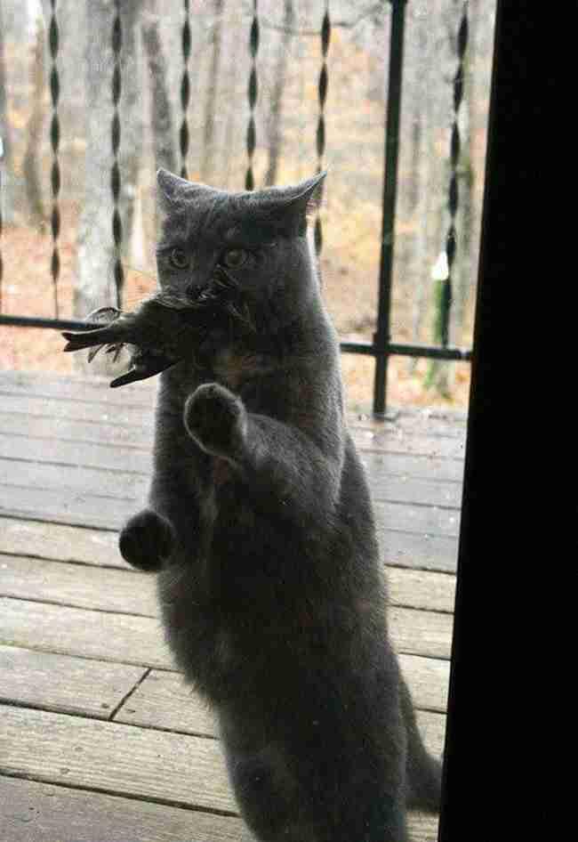 24 απίθανες φωτογραφίες με ζώα που κάνουν τα πάντα για να μπουν στο σπίτι!