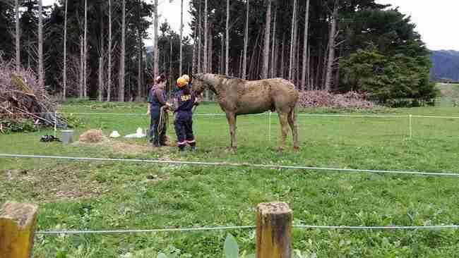 Βρήκαν ένα άλογο μέσα στη λάσπη, δυο μέτρα κάτω από το έδαφος. Αυτό που ακολούθησε είναι συγκλονιστικό