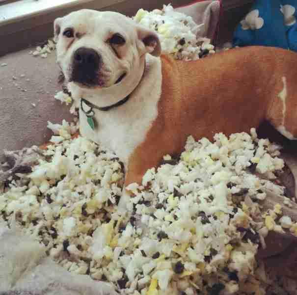 23 έκπληκτα σκυλιά που δεν περίμεναν ότι ο ιδιοκτήτης τους θα επιστρέψει σπίτι τόσο σύντομα..