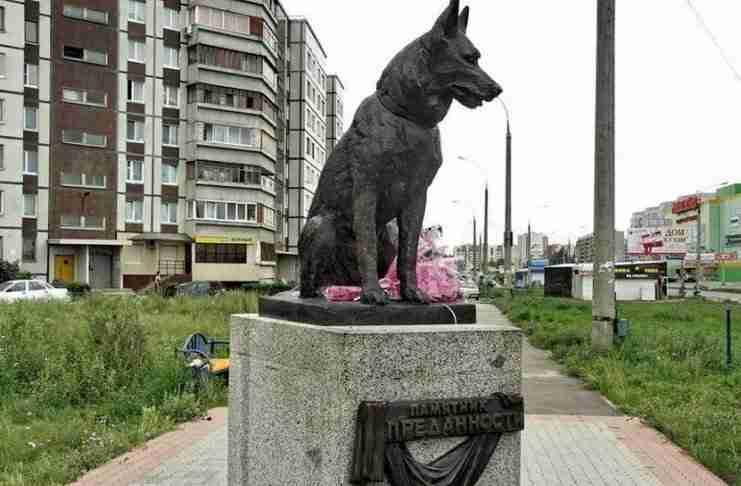 Αδέσποτος σκύλος περίμενε στο ίδιο σημείο για επτά χρόνια. Όταν μάθετε γιατί θα καταλάβετε πολλά..