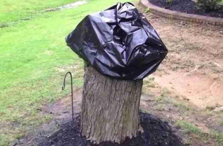 Ο σύζυγός της έκοψε το ξεραμένο δέντρο. Δυο εβδομάδες αργότερα το μετέτρεψε σε κάτι απίθανο!