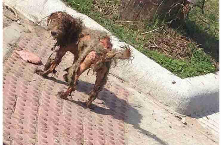 Η φωτογραφία αυτής της δύστυχης σκυλίτσας έγινε viral. Και της έσωσε τη ζωή..