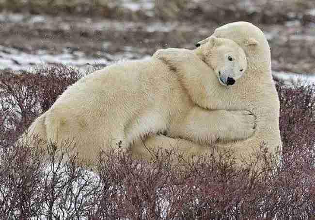 21 όμορφες φωτογραφίες με ζώα που γνωρίζουν καλά τι σημαίνει αγάπη..