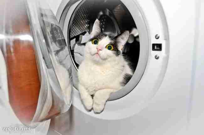 18 μέρη στα οποία ποτέ δεν θα ψάχνατε για τη γάτα σας..