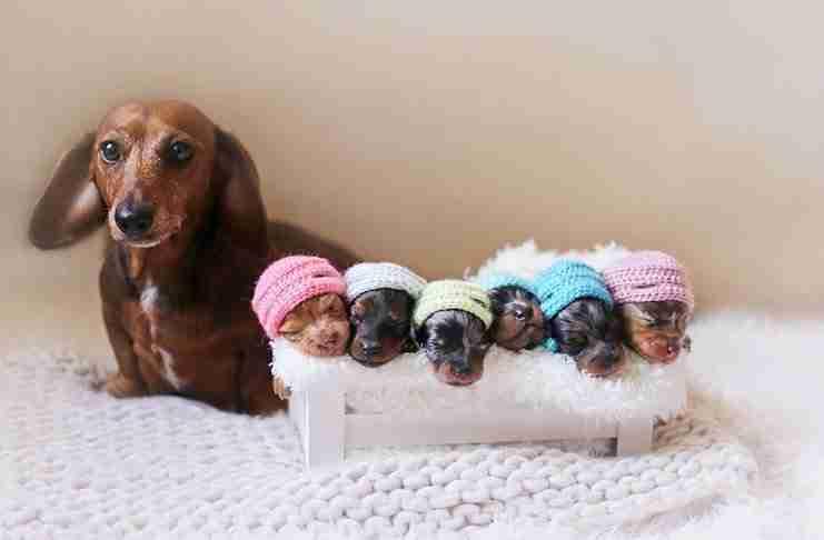 Περήφανη μανούλα ποζάρει με τα 6 μικρά της σε μια φωτογράφιση ύμνος στη μητρότητα!