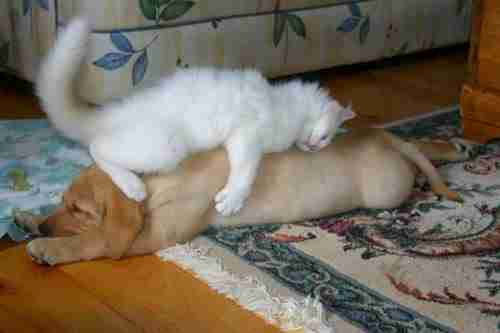 30 φωτογραφίες με σκύλους που κοιμούνται με τον πιο απίθανο τρόπο!