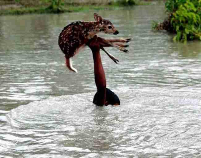 15 υπέροχες φωτογραφίες με ζώα που θα σας φτιάξουν τη μέρα..