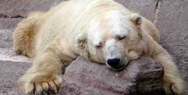 Ένα από τα πιο δυστυχισμένα ζώα του πλανήτη, ο Arturo, πέθανε κλεισμένος σε ζωολογικό κήπο
