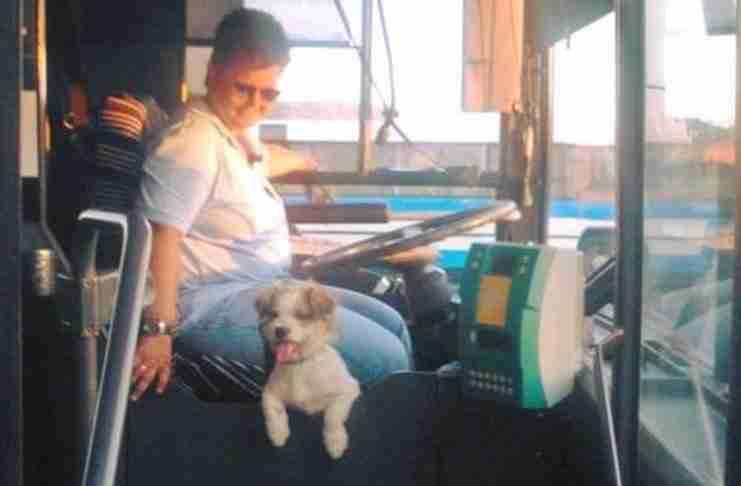 Γαρυφαλιά Ανδρουλάκη: Η οδηγός ΚΤΕΛ που δουλεύει παρέα με το σκυλάκι της