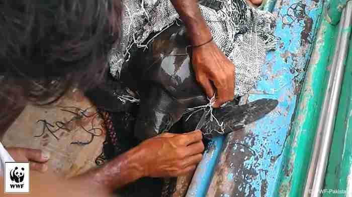 Όταν είδε μια θαλάσσια χελώνα παγιδευμένη σε ένα τσουβάλι έκανε κάτι πολύ όμορφο για να τη σώσει