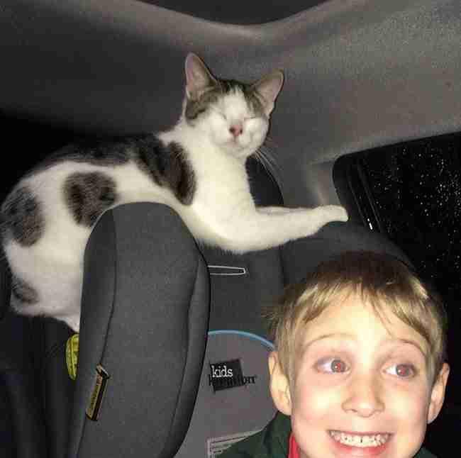 Έσωσε μια γάτα λίγο πριν της κάνουν ευθανασία. Ο τρόπος με τον οποίο την ευχαρίστησε είναι πραγματικά συγκινητικός.