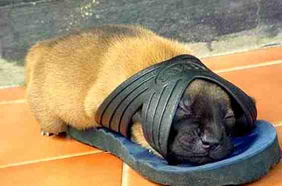 Τα κουτάβια κοιμούνται παντού κι εσύ απολαμβάνεις να τα χαζεύεις...