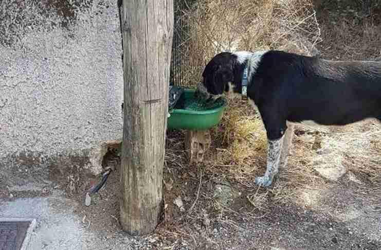 Αυτόματες ποτίστρες για τα αδέσποτα τοποθέτησε ο Δήμος Κηφισιάς. Πλέον κανένα αδέσποτο δεν θα διψάει