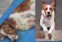 Όταν τον βρήκαν αυτός ο σκυλάκος αργοπέθαινε στην παραλία της Αταλάντης. Σήμερα μπορεί να ελπίζει ξανά.