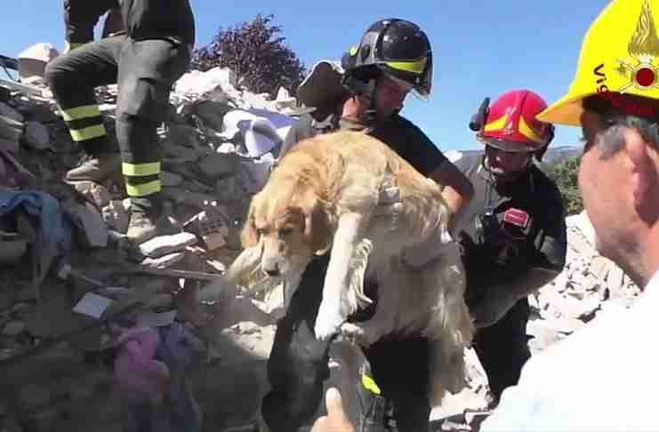 Σκύλος εντοπίστηκε ζωντανός κάτω από συντρίμμια 9 μέρες μετά τον σεισμό στην Ιταλία