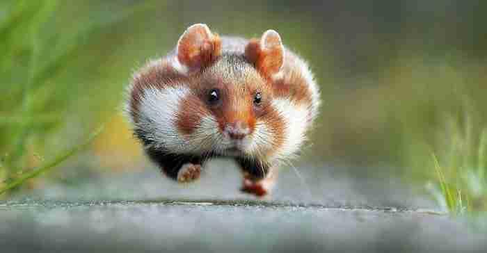 Διοργανώθηκε διαγωνισμός για την πιο αστεία φετινή φωτογραφία με ζώα. Αυτά είναι τα ξεκαρδιστικά αποτελέσματα..