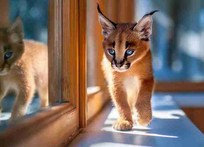 Μάλλον το πιο χαριτωμένο είδος γάτας που είδατε ποτέ..