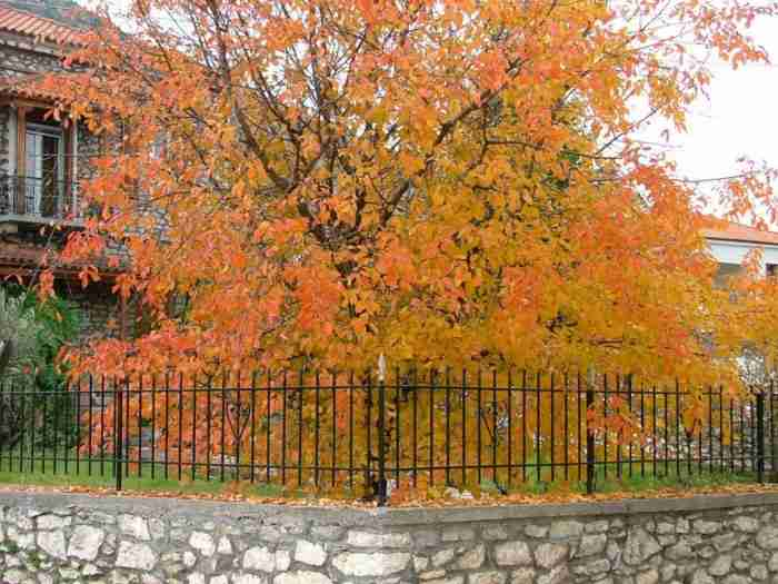 Το… αντίπαλο δέος της Αράχωβας: Ένα μαγικό χωριουδάκι 2,5 ώρες από την Αθήνα