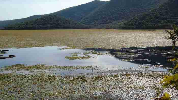 Τοπίο μοναδικής ομορφιάς! H μοναδική σε έκταση λίμνη με νούφαρα στην Ελλάδα που.. δεν θυμίζει Ελλάδα