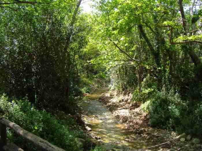 Αποτέλεσμα εικόνας για φοδελε χωριο ελ γκρεκο