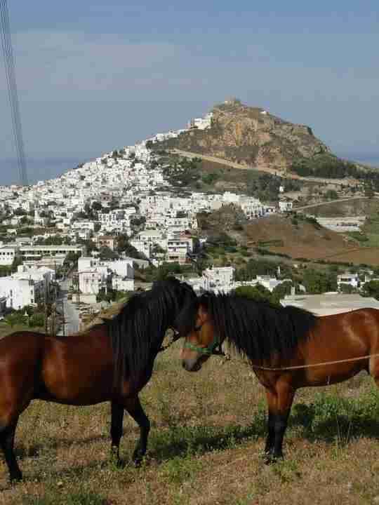 Το «διαμαντάκι»του Αιγαίου. Σπάνια γεράκια, προστατευόμενα άλογα, δάση με σφενδάμια και δαντελωτές παραλίες, 5 ώρες από την Αθήνα