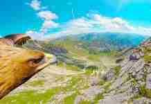 Κάμερα πάνω σε αετό, μας πετάει μαζί του πάνω από τις Άλπεις! Τα πλάνα είναι υπέροχα!
