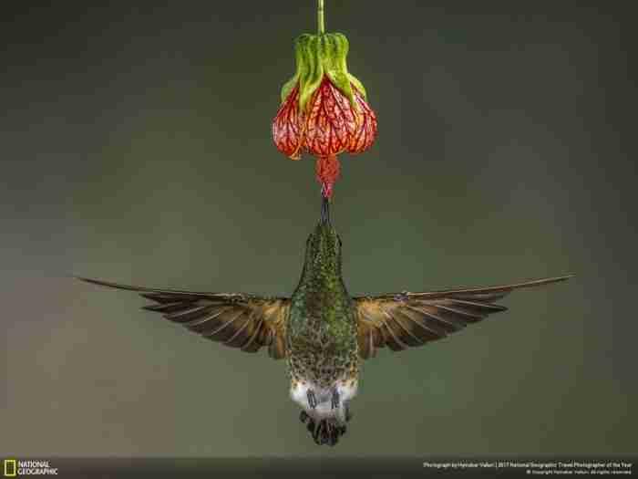 Οι φωτογραφίες που κέρδισαν στο φετινό διαγωνισμό του National Geographic είναι απλά.. μαγικές!