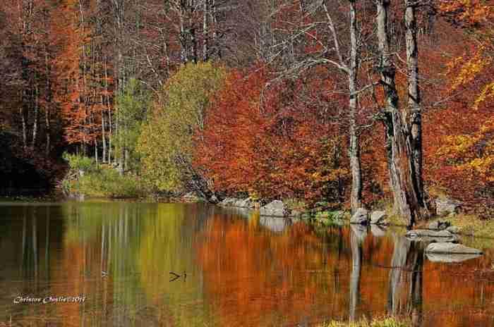 Υπάρχει μια πόλη στην Ελλάδα που κάθε Φθινόπωρο γίνεται ακόμη πιο όμορφη. Γίνεται χρυσή