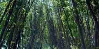Το «Μέγα Δάσος»: Η τελευταία ζούγκλα της Ευρώπης είναι στην Ελλάδα