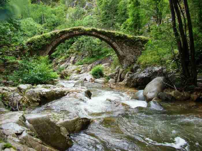 Μουσείο της φύσης: Το μεγαλύτερο ελατοδάσος της Ελλάδας βρίσκεται στην Δράμα και είναι 700.000 στρέμματα