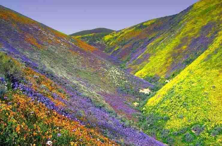 Η «Κοιλάδα των Λουλουδιών»: Ένα τοπίο εκπληκτικής ομορφιάς «κρυμμένο» στα Ιμαλάια