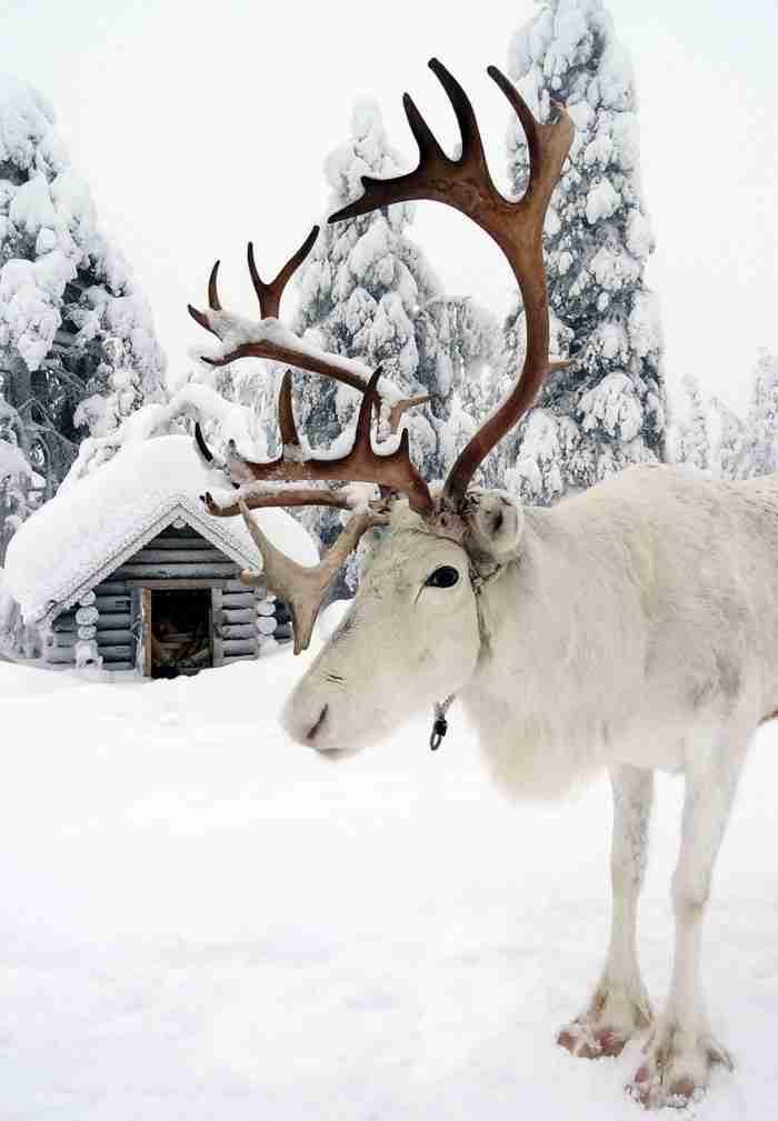 30 φωτογραφίες που αποδεικνύουν ότι η Λαπωνία είναι το πιο μαγικό μέρος για να γιορτάσετε τα Χριστούγεννα