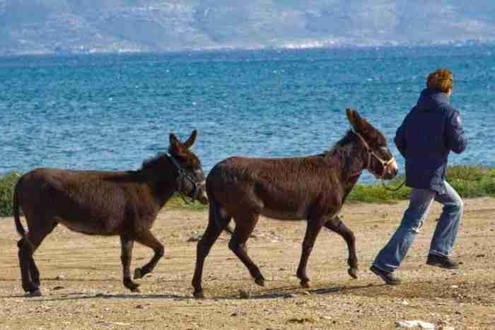Λίγα χλμ από την Αθήνα βρίσκεται η Γαιδουροχώρα. Το μοναδικό κέντρο για το γαιδουράκι στην Ελλάδα