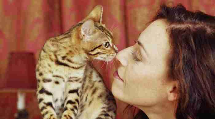 H επιστήμη μίλησε: Εξυπνότεροι είναι αυτοί που αγαπούν τις γάτες