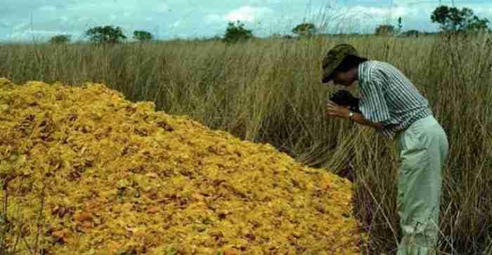 Εταιρία χυμών έριξε εκατομμύρια φλούδες πορτοκαλιού σε ερημική περιοχή – Να τι έγινε 16 χρόνια μετά