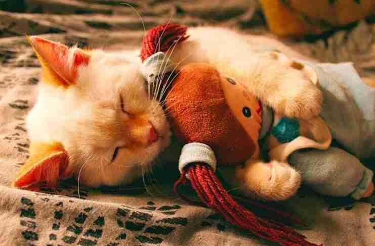 H επιστήμη μίλησε: Εξυπνότεροι άνθρωποι είναι αυτοί που αγαπούν τις γάτες