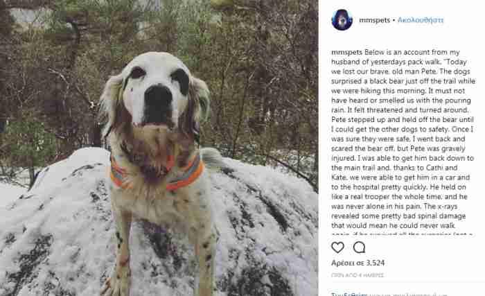 O σκύλος που τα έβαλε με αρκούδα και θυσιάστηκε για να σώσει το αφεντικό του