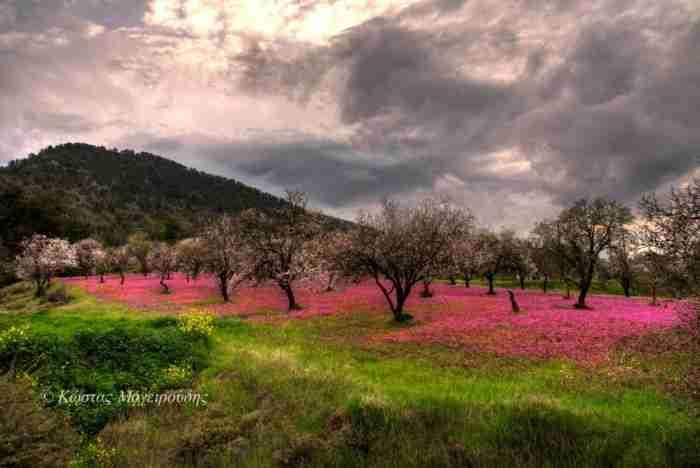 """Απίστευτη ομορφιά.. Το """"ροζ λιβάδι"""" για το οποίο μιλά όλη η Κύπρος σε 25 ονειρικές φωτογραφίες"""