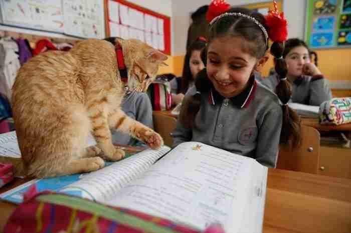 Μια ολόκληρη τάξη υιοθέτησε έναν γάτο. Κάνει κάθε μέρα μάθημα μαζί με τα παιδιά