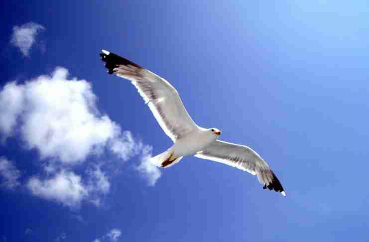 Ο γλάρος Ιωνάθαν που πετούσε για τη χαρά του πετάγματος. Όλα όσα μάθαμε από το βιβλίο-ύμνο στην ελευθερία