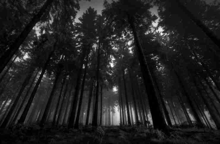 «Το δάσος με τα μαύρα δέντρα»: H ιστορία που πρέπει να διαβάσουν όλοι οι γονείς