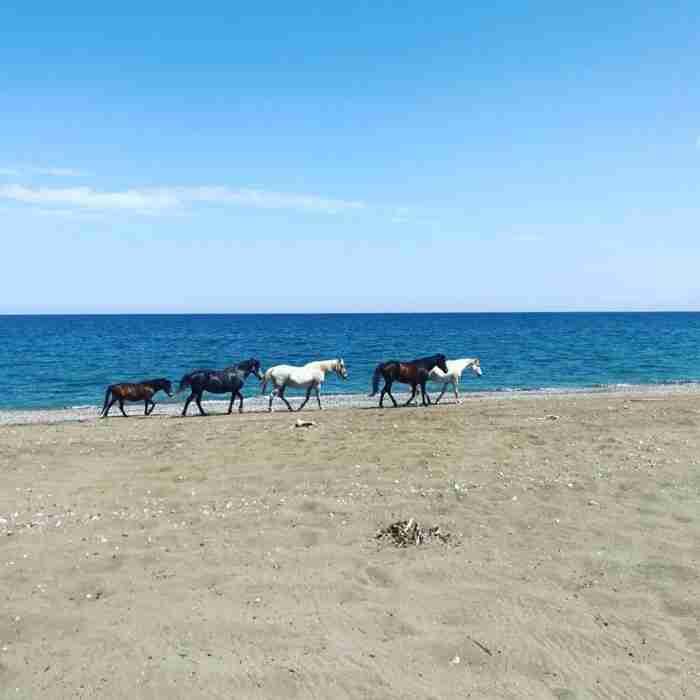 Ν. Κουρέλλου: Η αθλήτρια που παράτησε τη ζωή της στην Αθήνα για να σώζει εγκαταλελειμμένα άλογα στην Εύβοια