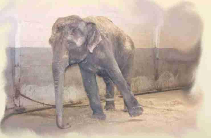 Χόρχε Μπουκάι: Ο αλυσοδεμένος ελέφαντας