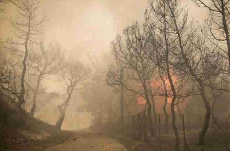 Γιατί καίγονται τα δάση; Μια ψύχραιμη άποψη από τον καθηγητή Νίκο Μάργαρη