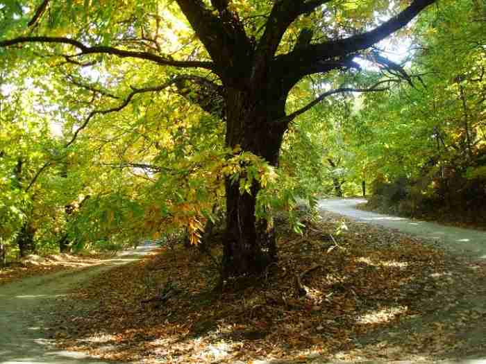 Road trips: Οι ωραιότερες φθινοπωρινές διαδρομές με αυτοκίνητο στην Ελλάδα